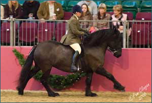 Sunglow Lady Paula competing at Olympia, treated by Claire Warman