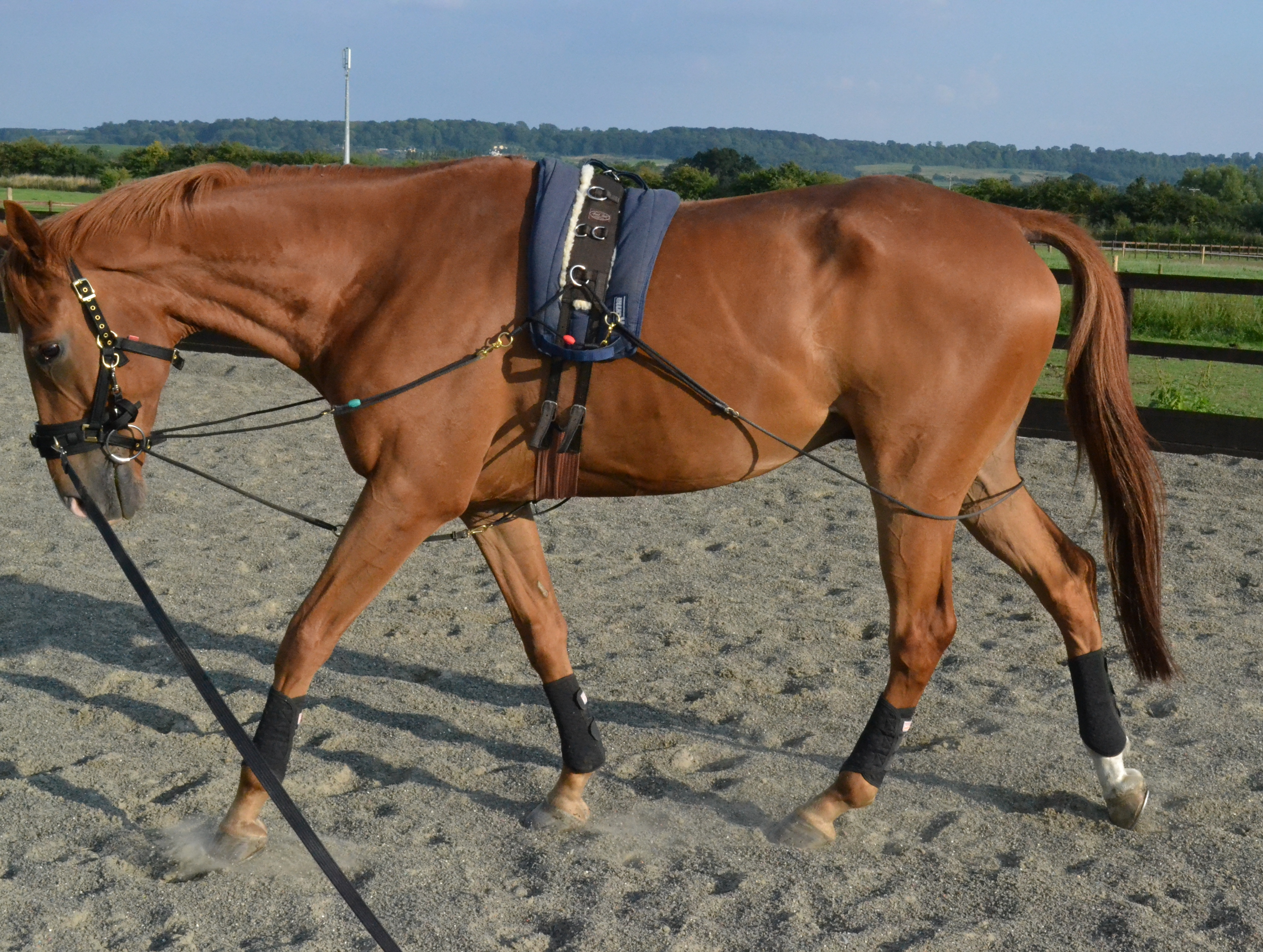 Horse lunging in Pessoa to improve core strength